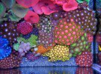 Corales 203x150 - No hay poder más fuerte que el amor