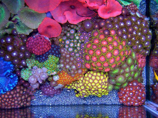Corales - No hay poder más fuerte que el amor