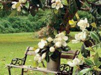 2 64 203x150 - Cuidar nuestro  jardín