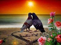 2 56 203x150 - ¿Qué es el amor?