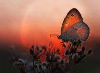 539231 340930709341791 2021275106 nmariposa puesta de sol 203x150 - El amor es el camino que recorro con gratitud