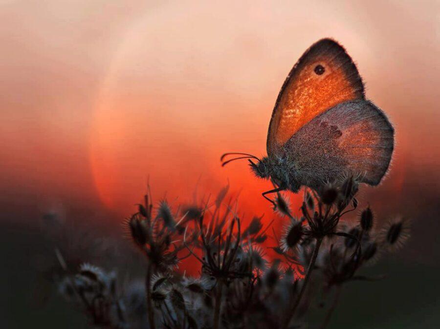 539231 340930709341791 2021275106 nmariposa puesta de sol 900x674 - El amor es el camino que recorro con gratitud