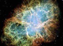 2 183 203x150 - El universo se expresa a través de la evolución