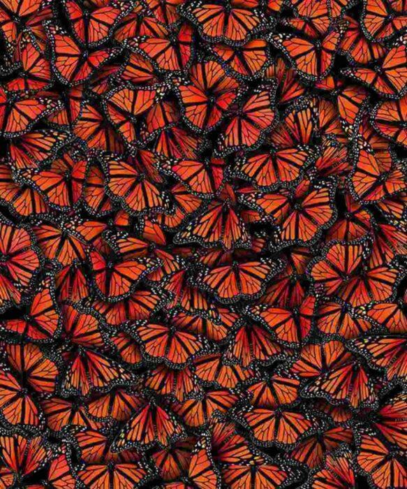 3 80 583x700 - Hipersimetría y Sincronicidad