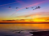 3 169 203x150 - La verdad espiritual está más allá del significado