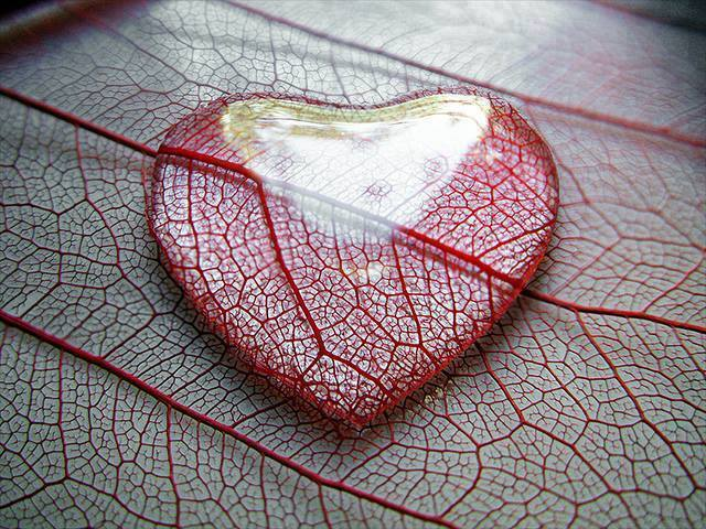 5 57 - Cómo no perder el corazón