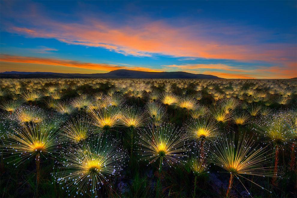 International Garden Photographer2 - EL TESORO ESCONDIDO